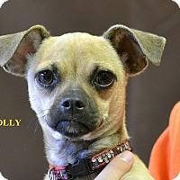 Adopt A Pet :: POLLY - Higley, AZ