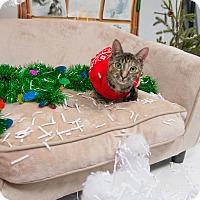 Adopt A Pet :: Pistachio - New York, NY