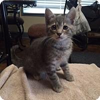 Adopt A Pet :: Maxwell - Kelso/Longview, WA