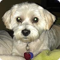 Adopt A Pet :: Peaches - bonded with Sadie - Lisbon, IA