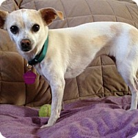 Adopt A Pet :: Kensie - Creston, CA