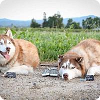 Adopt A Pet :: Bonded pair - San Martin, CA