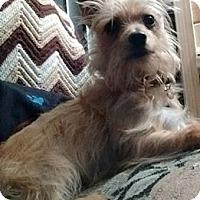 Adopt A Pet :: Cassie - Princeton, MN