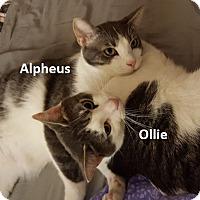 Adopt A Pet :: Alpheus - Houston, TX