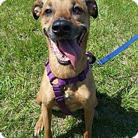 Adopt A Pet :: Jacks - Burlington, NC