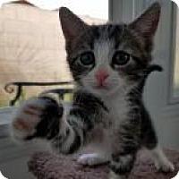 Adopt A Pet :: Brooklyn - Mission Viejo, CA