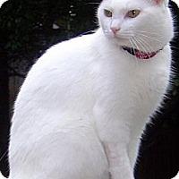 Adopt A Pet :: Mish - Alexandria, VA