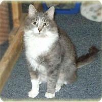Adopt A Pet :: Will - Howell, MI