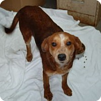 Adopt A Pet :: Rayna- IN CT - West Hartford, CT