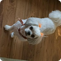 Adopt A Pet :: London - Homer Glen, IL
