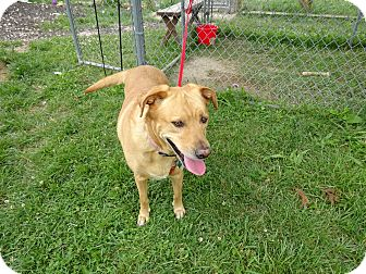 Labrador Retriever Mix Dog for adoption in Delaware, Ohio - Lilly