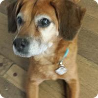 Adopt A Pet :: Tucker - LaGrange, KY
