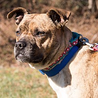 Adopt A Pet :: Cricket the Mama Dog - Midlothian, VA