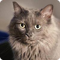 Adopt A Pet :: Malcom - Drippings Springs, TX