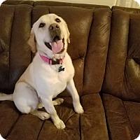 Adopt A Pet :: Tammy - Ogden, UT