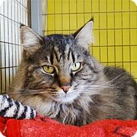 Adopt A Pet :: Libra - St. Johnsbury, VT