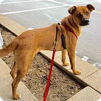 Adopt A Pet :: Sandy - Conesus, NY