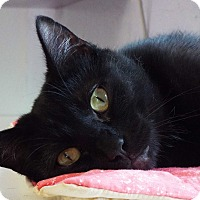Adopt A Pet :: Hope - Grants Pass, OR
