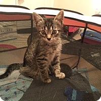 Adopt A Pet :: Maggie - Herndon, VA