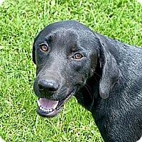 Adopt A Pet :: Chloe - Providence, RI
