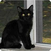 Adopt A Pet :: Morgan - Arlington, VA