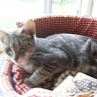Adopt A Pet :: Saturn - Kelso/Longview, WA