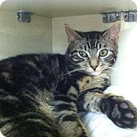 Adopt A Pet :: Connor - Riverhead, NY