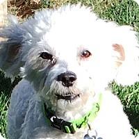 Adopt A Pet :: Elf - La Costa, CA