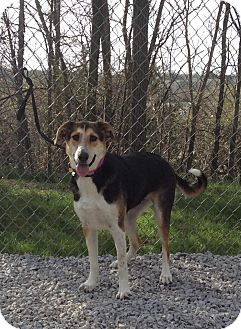 Collie/Hound (Unknown Type) Mix Dog for adoption in Atchison, Kansas - Bonnie
