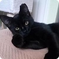 Adopt A Pet :: B.C. - Asheville, NC