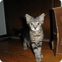Adopt A Pet :: Jigglypuff - Milwaukee, WI