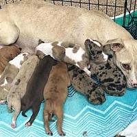 Adopt A Pet :: Ana - Sayville, NY