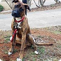 Adopt A Pet :: Luke - Seabrook, NH