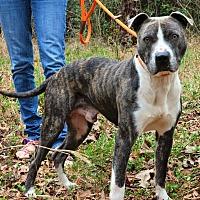 Adopt A Pet :: Jerry - Washington, GA
