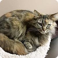 Adopt A Pet :: Honey Boo Boo - Troy, MI
