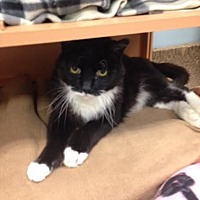 Adopt A Pet :: Tarragon - Byron Center, MI