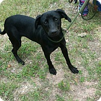 Adopt A Pet :: Lemon Drop - Livingston, TX