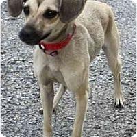 Adopt A Pet :: Lisa - Toronto/Etobicoke/GTA, ON