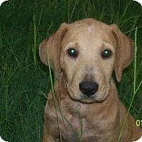 Adopt A Pet :: Jake - South Jersey, NJ