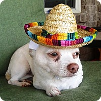 Adopt A Pet :: Vito - Homewood, AL
