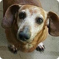 Adopt A Pet :: Dexter Dugout - Houston, TX