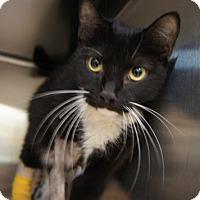 Adopt A Pet :: Kuzu - Herndon, VA