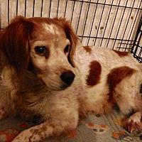 Adopt A Pet :: Mitzi - Phoenix, AZ
