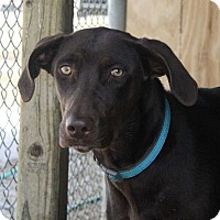 Adopt A Pet :: CoCo - Fort Madison, IA