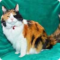 Adopt A Pet :: Angie - Buford, GA