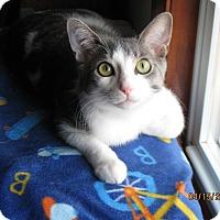 Adopt A Pet :: Jasper - Lombard, IL