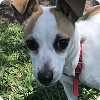 Adopt A Pet :: Rosie in Houston - Austin, TX