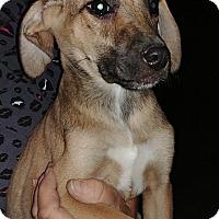 Adopt A Pet :: Star - Ogden, UT