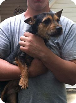 Terrier (Unknown Type, Small) Mix Puppy for adoption in Shirley, New York - Brandon
