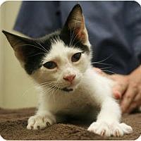 Adopt A Pet :: Wallie - Secaucus, NJ